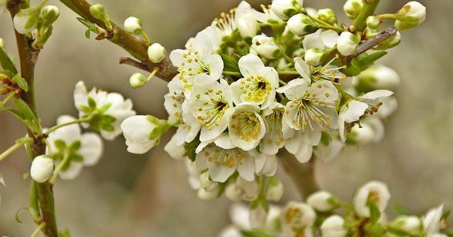 kwiaty na drzewach fotografia