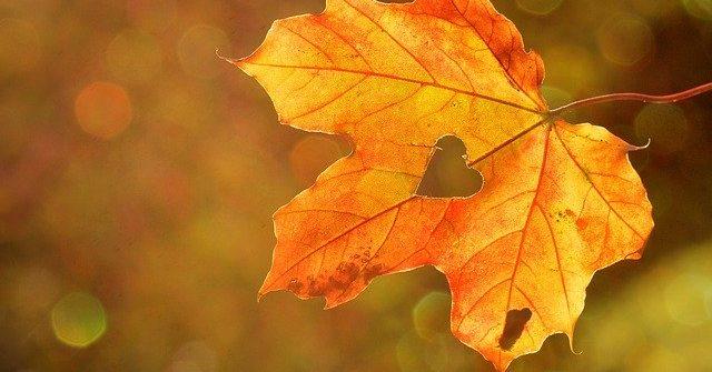 liść jesienny fotografia